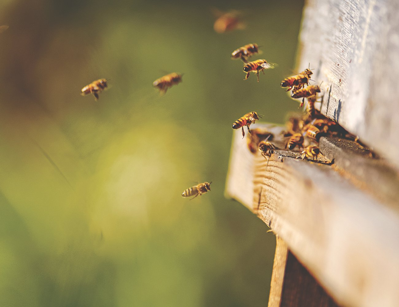 Hall Hunter uses sustainable farming practices such as wild bee pollination