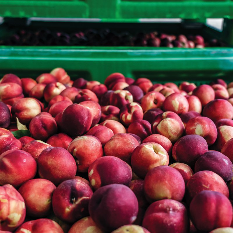 Peaches reach Spinneys within 48 hours of being harvested